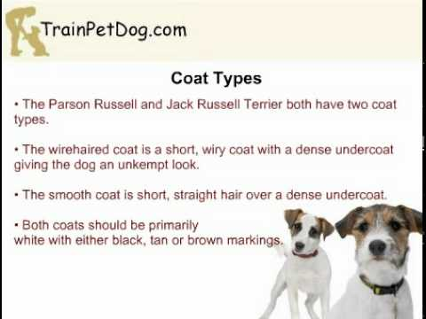 Jack Russell Terrier and Parson Russell Terrier - Are They Two Different Dog Breeds?