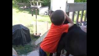 Un Baiser à La Rottweiler/pitbull...