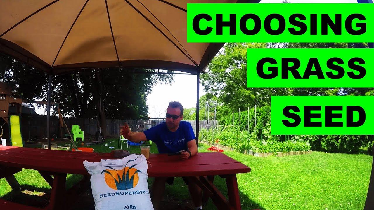 choosing grass seed