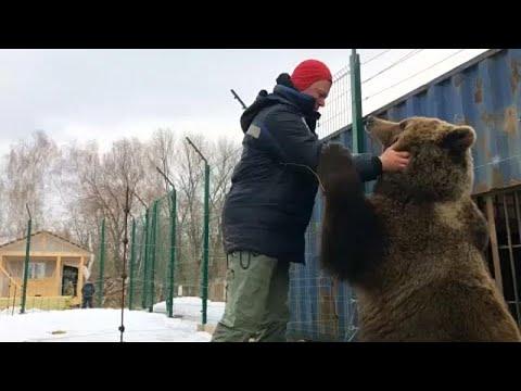 Havalimanı personelinin baktığı boz ayı Rusya'da Youtube fenomeni haline geldi