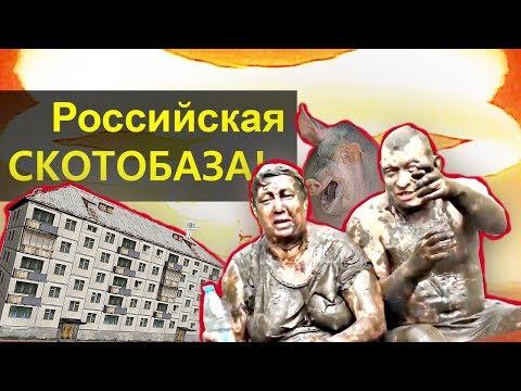 РОССИЙСКАЯ СКОТОБАЗА!