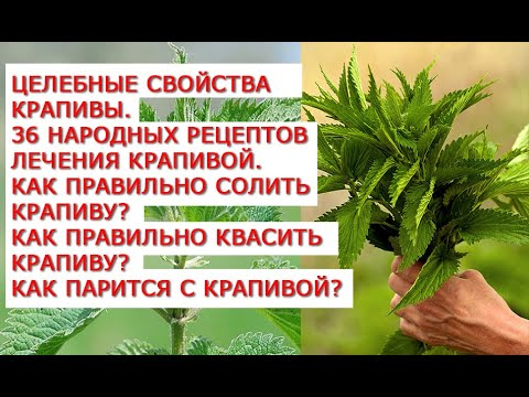 Целебные свойства крапивы  36 народных рецептов лечения крапивой  Как правильно солить крапиву | гинекологии | целебные | свойства | потенции | крапивой | рецепты | лечения | крапивы | крапиву | крапива