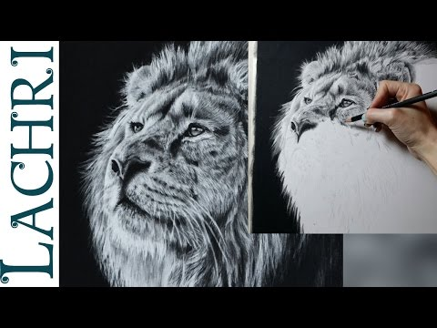 Speed drawing lion in graphite & carbon pencil - Time Lapse tutorial by Lachri