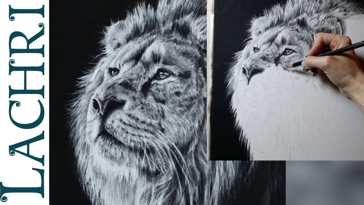 Speed Drawing Lion In Graphite Amp Carbon Pencil Time