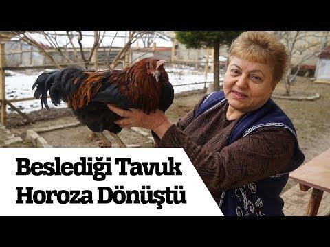Bahçesinde Beslediği Tavuk, Horoza Dönüştü