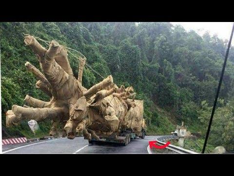 """Bí mật 3 cây đa sộp """"quái thú"""" từ đất Đắk Lắk"""