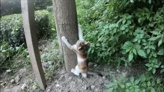 Little kitten learning to climb a tree