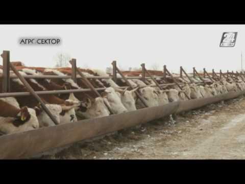 Агросектор. В каких условиях должны зимовать коровы?