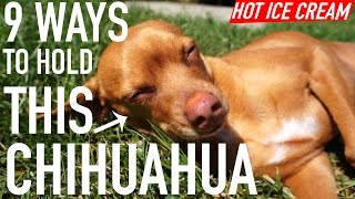 9 Ways to Hold This Chihuahua Thumbnail