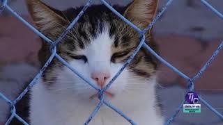 Взять кота или собаку из приюта можно будет на выставке в Фонтанке