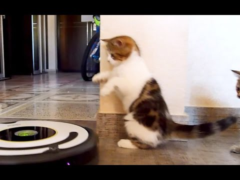 Cute Kittens dancing tango | Funny Cats video