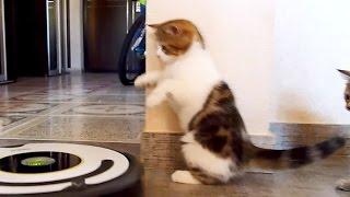 Cute Kittens dancing tango   Funny Cats video