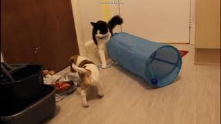 Cat & Dog meeting for the first time