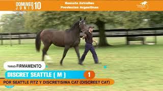 01 - DISCRET SEATTLE (m), por Seattle Fitz y Discretisima Cat por Discreet Cat - Haras Firmamento