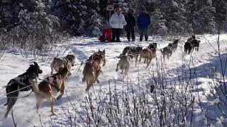 2018 Anchorage Fur Rondy Sled Dog Race (excerpts)