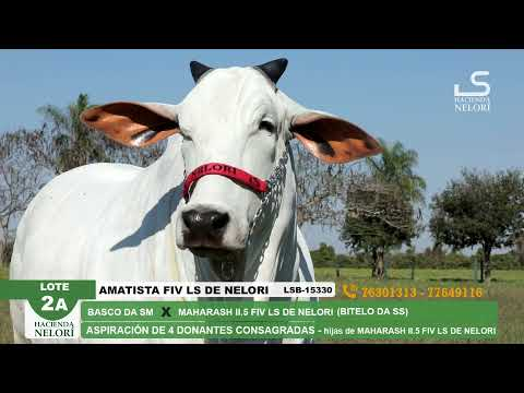 Lote 2A Amatista FIV LS