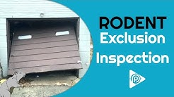 Rodent Exclusion Inspection (episode 39B)