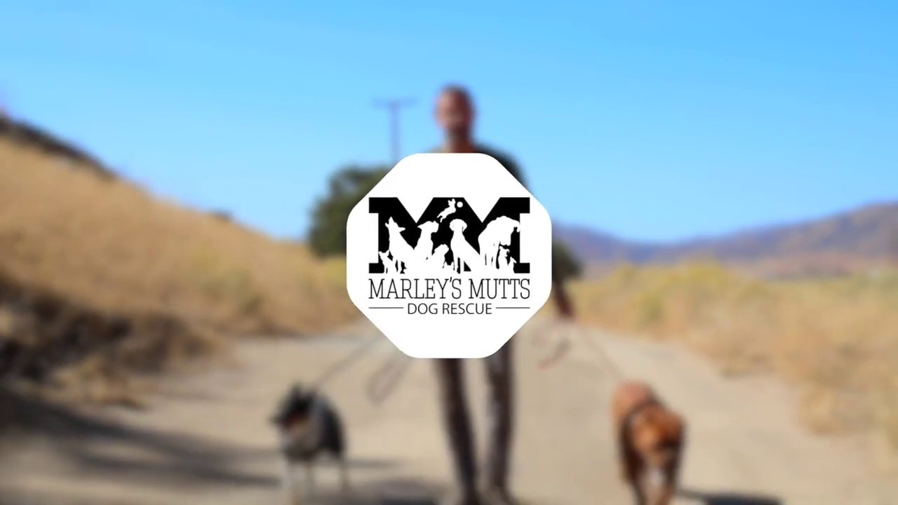 Welcome to the Marley's Mutts Rescue Rance