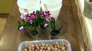 какие орхидеи купил на распродаже / ПОЯВИЛИСЬ МОШЕННИКИ