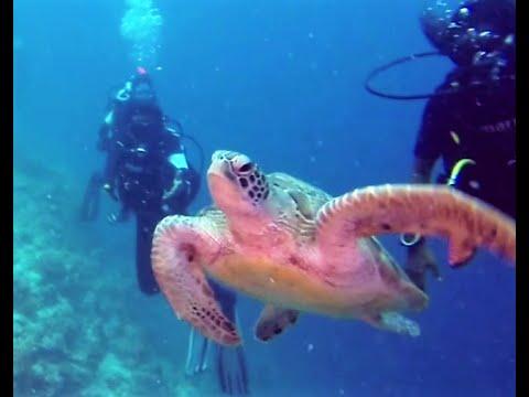 Ninestar Diving Villingili, Maldives
