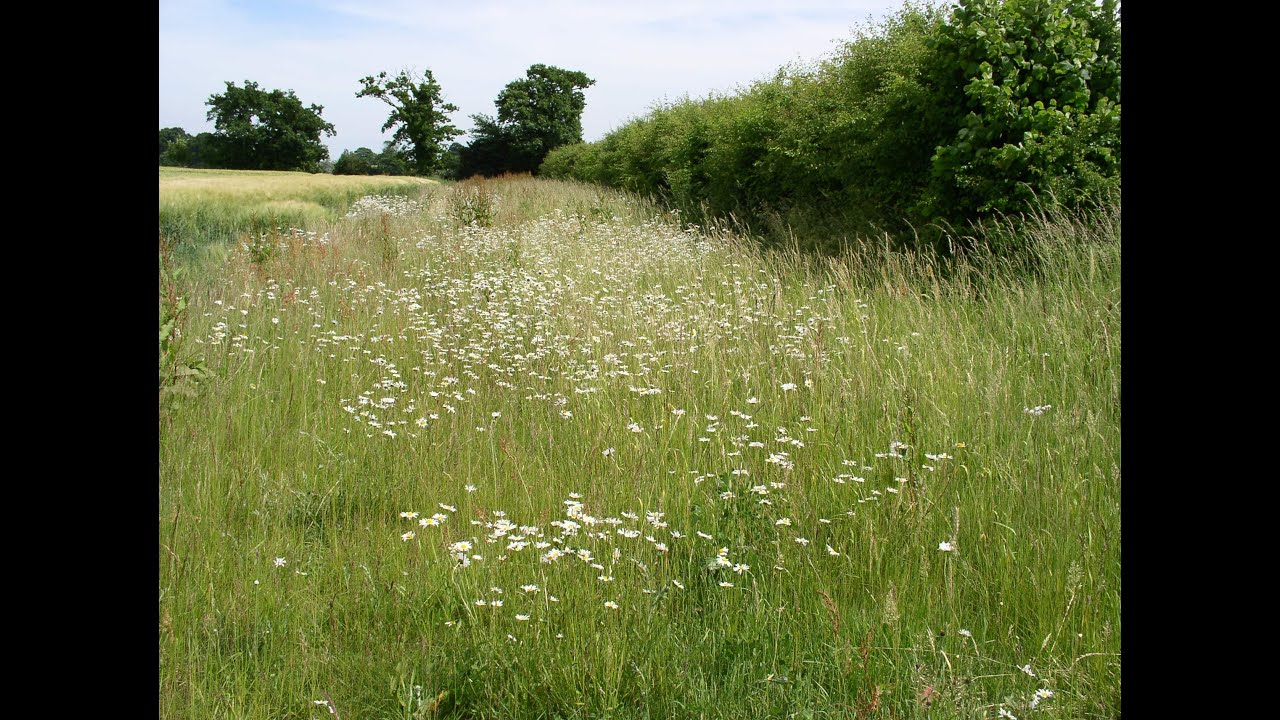 Hedgerows, a legacy - National Hedgerow Week 2021