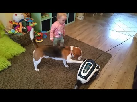 Baby teaches cute dog to use hoover