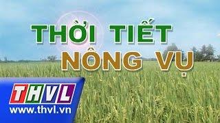 THVL | Thời tiết nông vụ (22/11/2015)