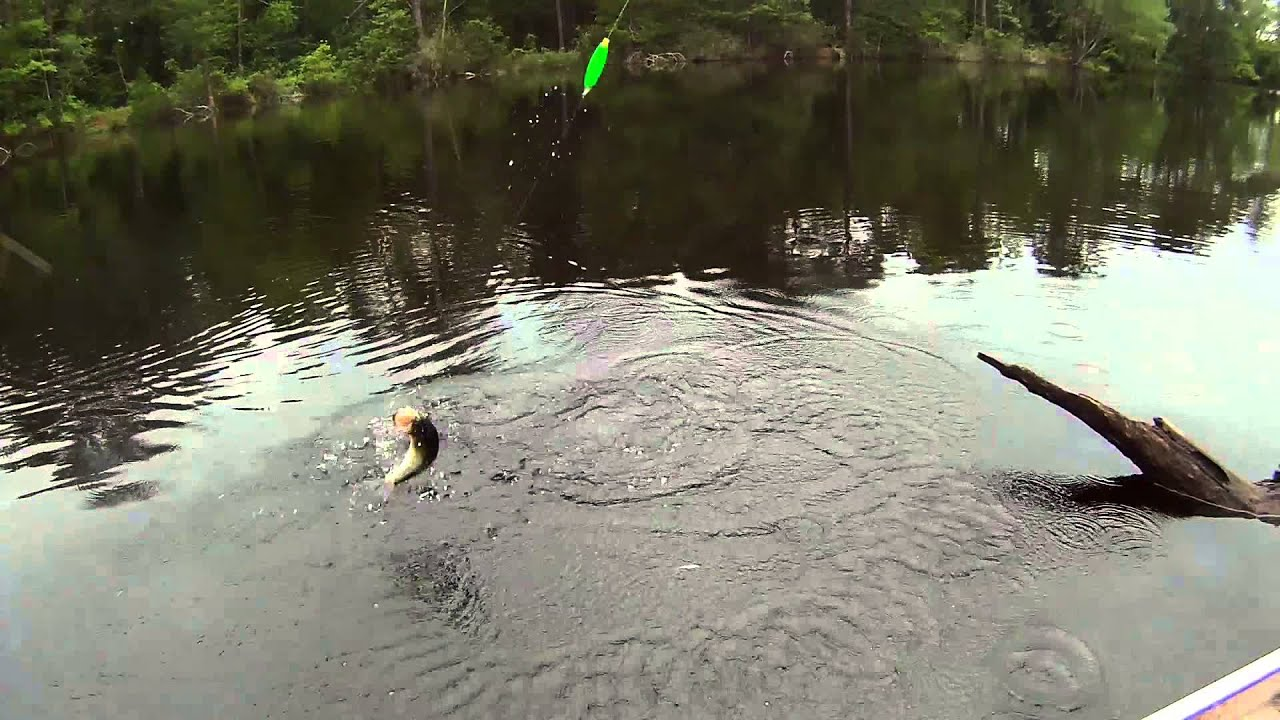 Tattnall county pond fishing youtube for Georgia out of state fishing license