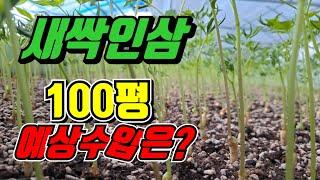 고소득 귀농작물 새싹삼 수익공개 새싹삼키우는 재배방법 …