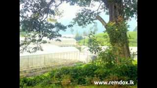 Tea plantation for sale in Nuwara Eliya, Sri Lanka. Investment opportunity.(ROI) min.20%
