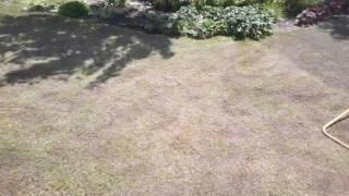 Kratši verze zdokumentovani obnovy travniku
