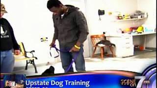 Cool Job#31: Dog Trainer. Jamarcus Gaston Takes His Pup Koa To Upstate Dog Training.