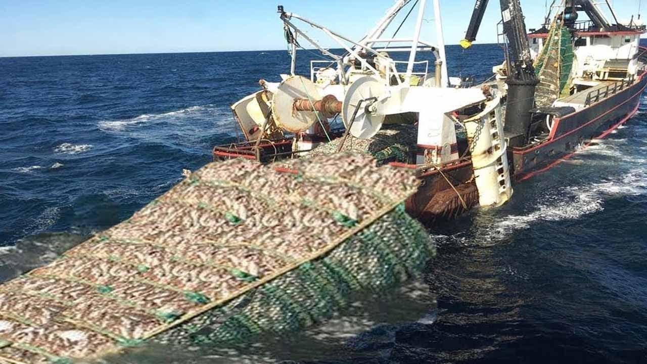 Amazing Big Catching on The Sea With Modern Big Boat - Amazing Giant Fishing Net I Never Seen