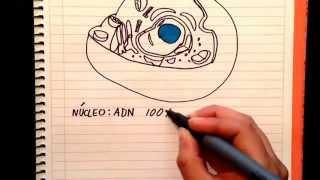 Guia examen unam 2015 biología/2