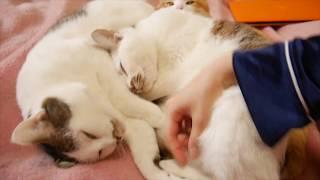 4匹の猫に囲まれて寝てる気分になれる動画