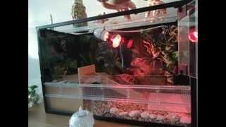 Сухопутная черепаха(Все о жизни сухопутной черепахе в домашних условиях., 2012-12-26T10:10:18.000Z)