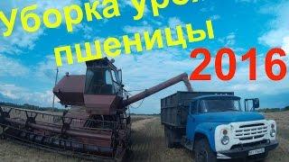 Уборка урожая пшеницы 2016