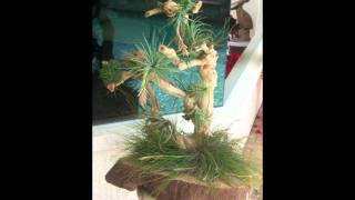 Debbi's Unique Gifts - Handmade Gifts Such As Wooden Air Plant Cerpieces In Port Charlotte, Florida