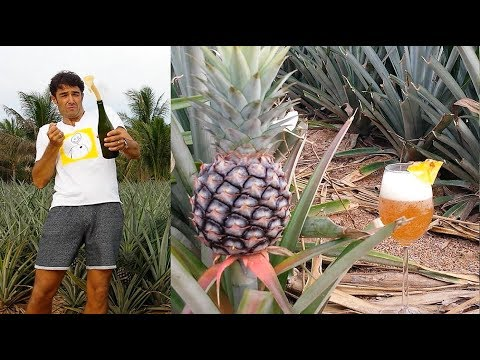 Pineapple Wine how to make at home