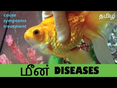 Common Fish Diseases, Causes, Symptoms And Treatments - Tamil