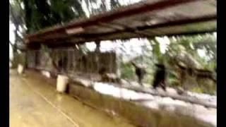 Lista K9 farm philippines