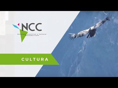 El Cóndor andino en el sol peruano - PER - XINHUA / Cultura / NCC 27 / 12 02 18