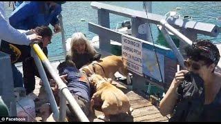 Nuevo Ataque de Perros Pitbulls ahora en Avalon California.