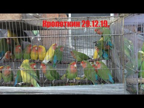 29.12.19. Птичий рынок г. Кропоткин( ч1) Kropotkin Bird Market (part 1)