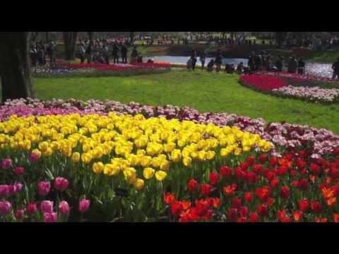 Spring, the season of flowers