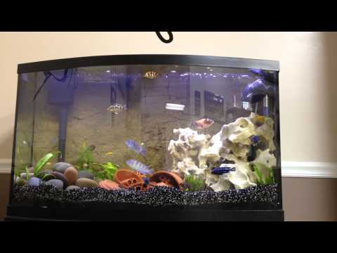 Steve Poland Cichlids 300 Subscriber Contest Entery