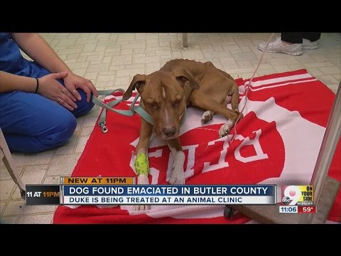 Owner of emaciated dog denies abuse allegations