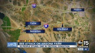 Bee attack on farm near Yuma