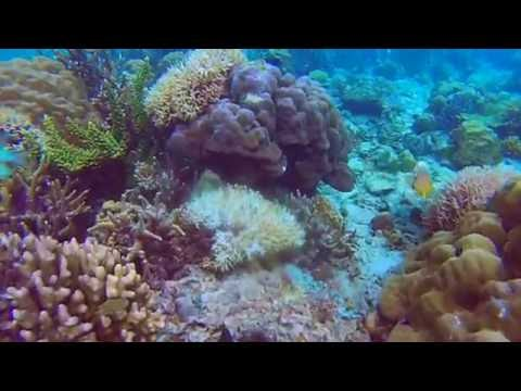 Coral Reefs Of The Philippines