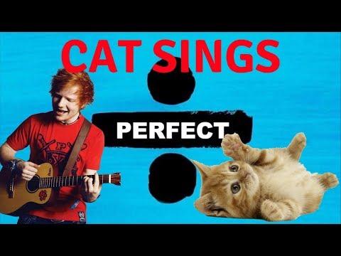 Cats Sing Perfect by Ed Sheeran | Cats Singing Song